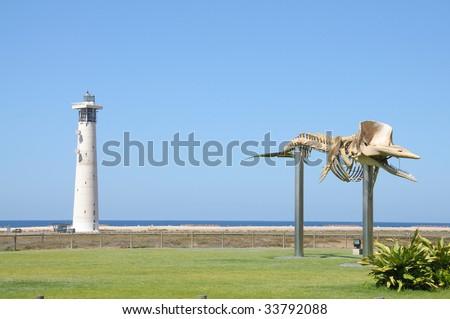 Whale skeleton in Jandia Playa, Canary Island Fuerteventura, Spain