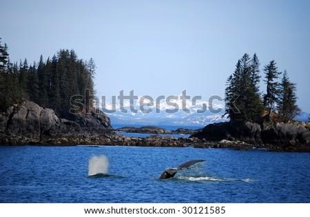 Whale swimming in ocean near Valdez, Alaska