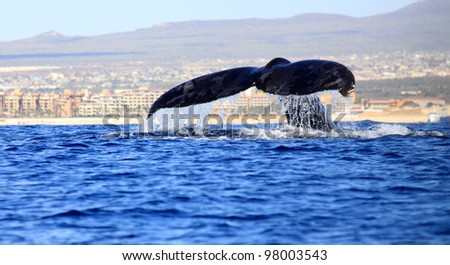 Whale Tail - stock photo