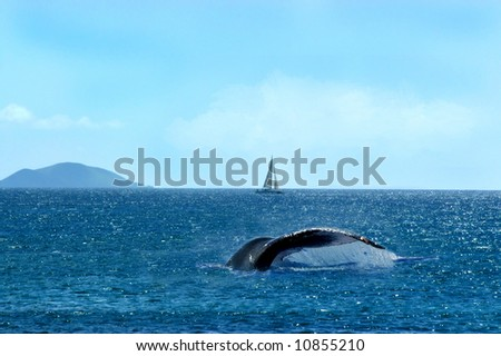 Whale tail flips surface of water off shores of Maui, Hawaii.  Boat sails the horizon and mountain rises in the  distance.