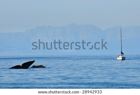 Whale tail with sailing boat
