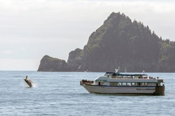 Whale watching cruise tour in Alaska during Summer
