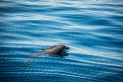 Whale watching with dolphin sighting off the coast of Tenerife