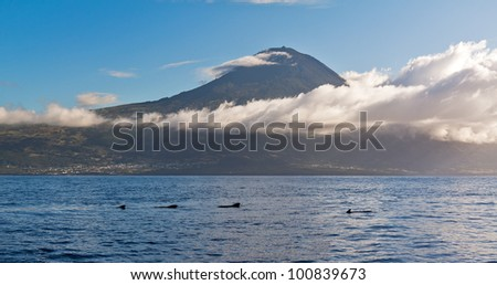 Whales Azores with mountain Pico