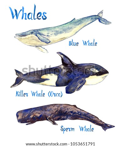desktop image sperm whale