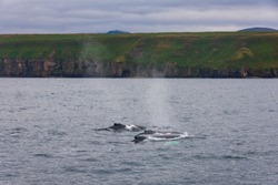 Whalewatching on Iceland