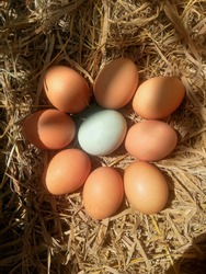 what it feels like to be born different or become a special person like a duck egg between chicken eggs in the photo