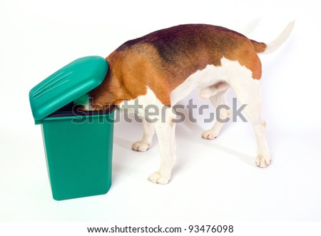 What news? The dog checks a green garbage can.