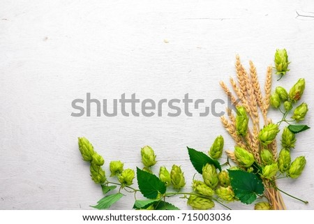 Wheat and hops on a wooden background. Top view. Free space for text.