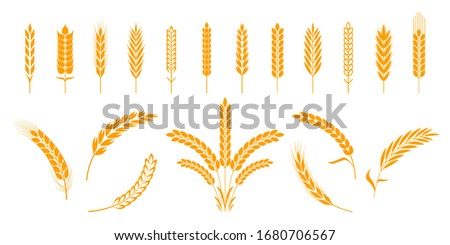 Wheat and rye ears. Barley rice grains and elements for beer logo or organic agricultural food.  illustration isolated heraldic shapes golden patterns rice and barley
