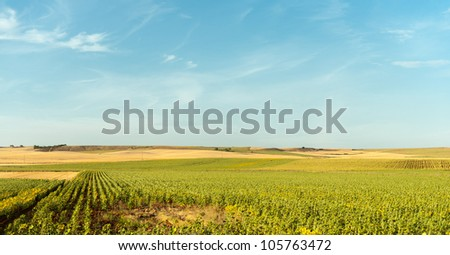 Wheat and sunflower fields in Spain #105763472