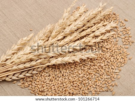 wheat and wheat-ears on burlap closeup