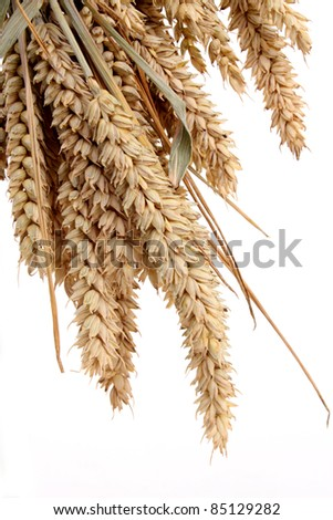 Wheat as bakery product in a studio setting