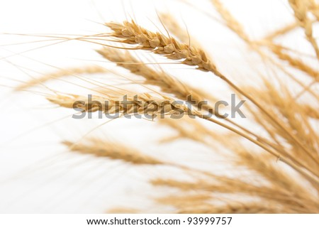 wheat as the background