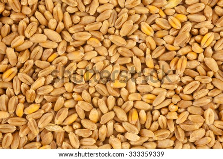 Wheat background view from the top close up #333359339