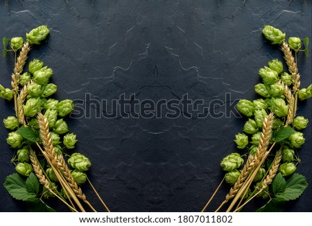 Wheat beer concept background. Cones of hops and wheat ears arranged symmetrically on the black stone surface. Oktoberfest template with copy space.
