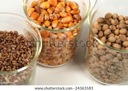 wheat, corn, soy seeds grain trio - stock photo