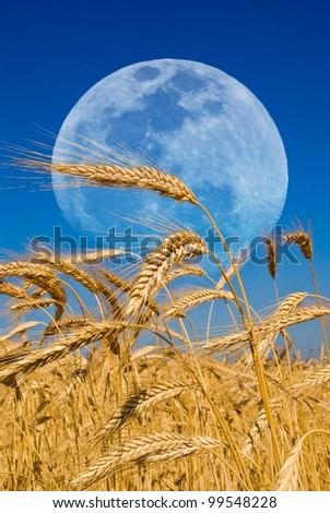 wheat ears and a huge moon