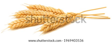 Wheat ears isolated on white background. Package design element with clipping path. Full depth of field