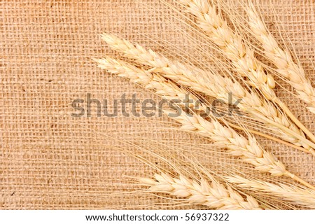 Wheat ears on a textile background - stock photo