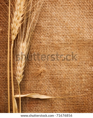 Wheat Ears over Burlap background #71676856