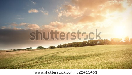 Wheat farm against sky #522411451