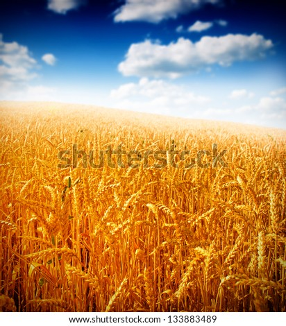 Wheat field #133883489