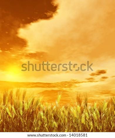 Wheat field #14018581