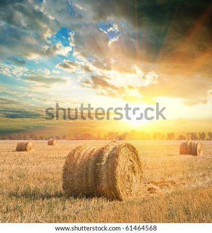 wheat field after a harvest at the evening