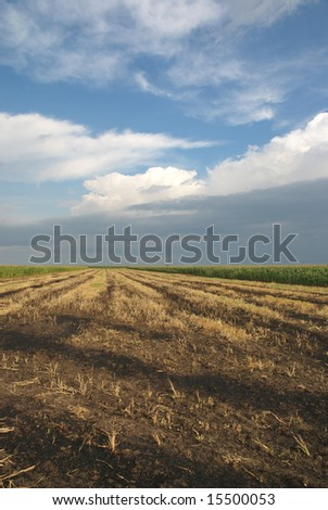 Wheat field after fire in harvest time