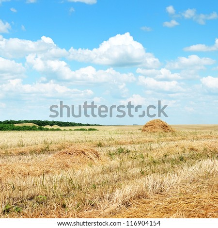 Wheat field after harvest