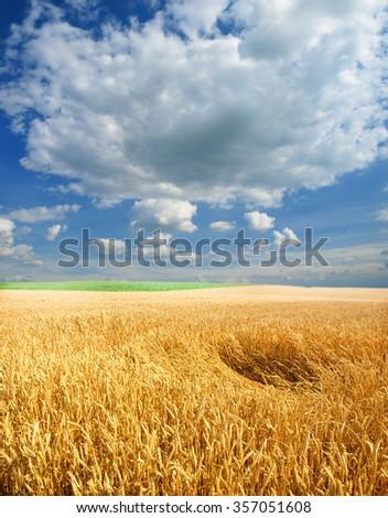 Wheat field against a blue sky #357051608