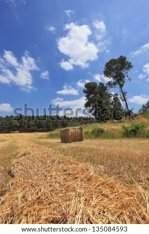 Wheat field and a stack of wheat at the edge of the forest. The rural idyll