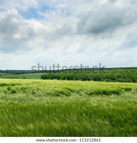 wheat field and cloudy sky
