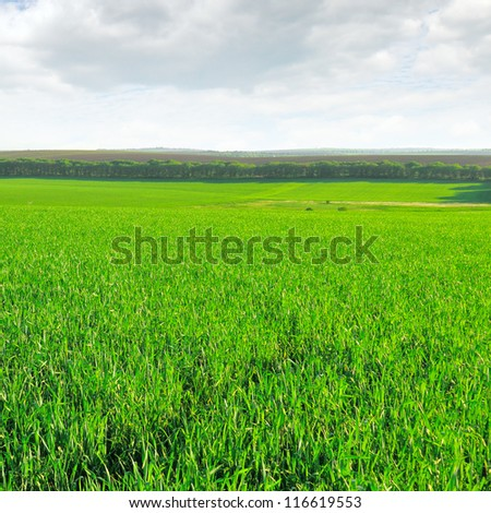 wheat field and cloudy sky - stock photo