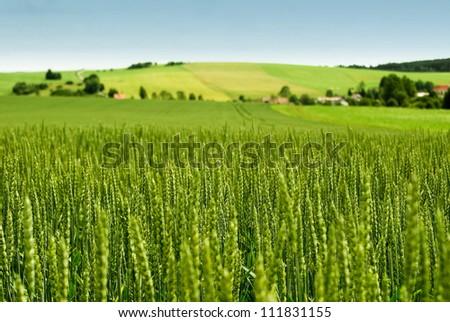 Wheat Field And Countryside Scenery