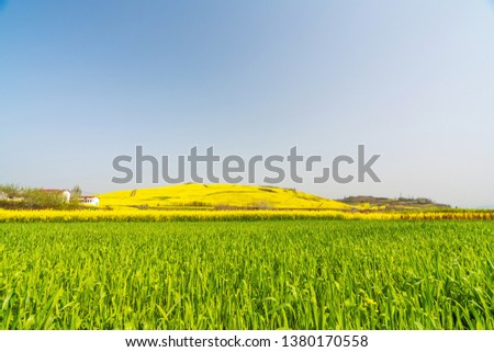 Wheat field and rapeseed field #1380170558