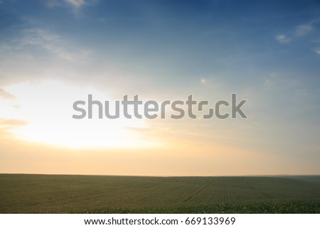Wheat field at dawn #669133969
