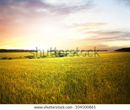 Wheat field at sunset #104500865