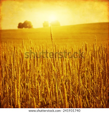 Wheat field at sunset in grunge and retro style. #241931740