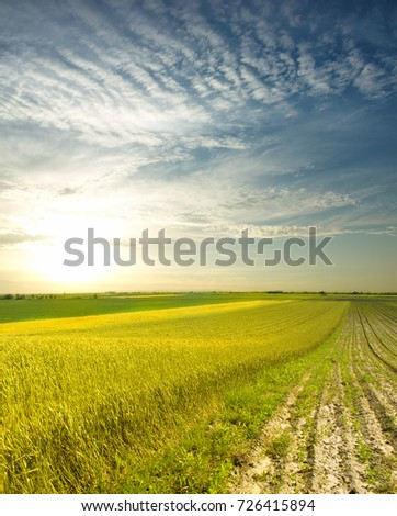 wheat field at the sunset #726415894