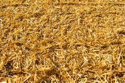 wheat field background,  straw, hay, agriculture