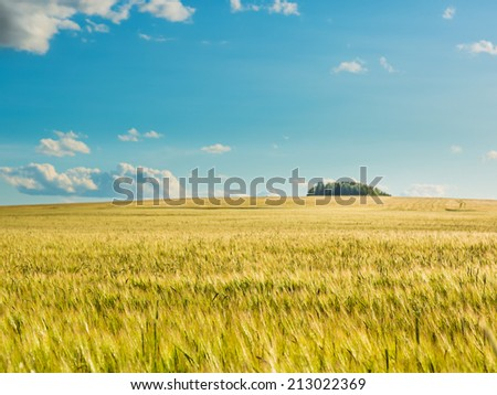 Wheat field by summertime.  #213022369