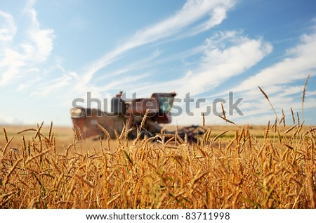 Wheat field. Kombain in a wheat field on a background of blue sky.