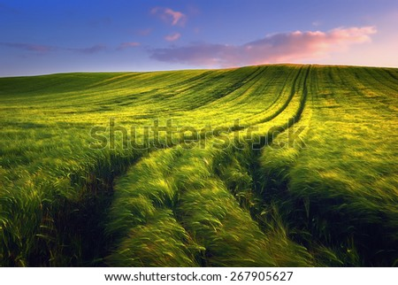 Wheat field landscape with path in the sunset time, Hungary #267905627