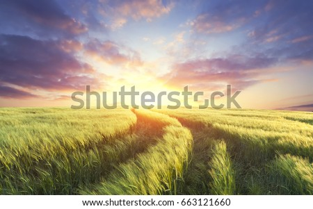 Wheat field on a sunset #663121660