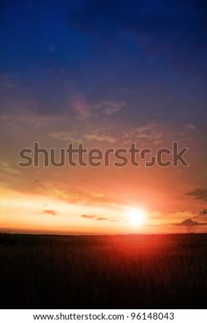 wheat field on sunset #96148043