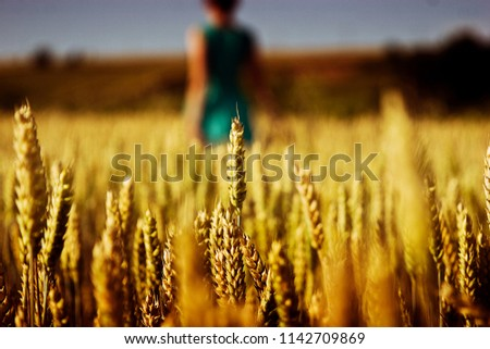 Wheat field on the background of a gentle girl who hands touches the spikelets of wheat #1142709869