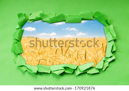 Wheat field  through hole in paper