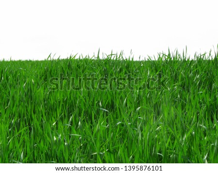 wheat field, wheat field, wheat, green background young wheat on the field, white sky #1395876101